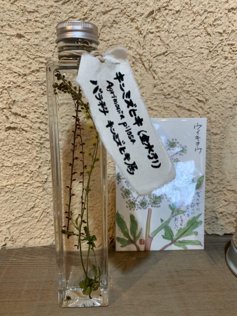 une des plantes médicinales sauvages de la satoyama de Hida Takayama