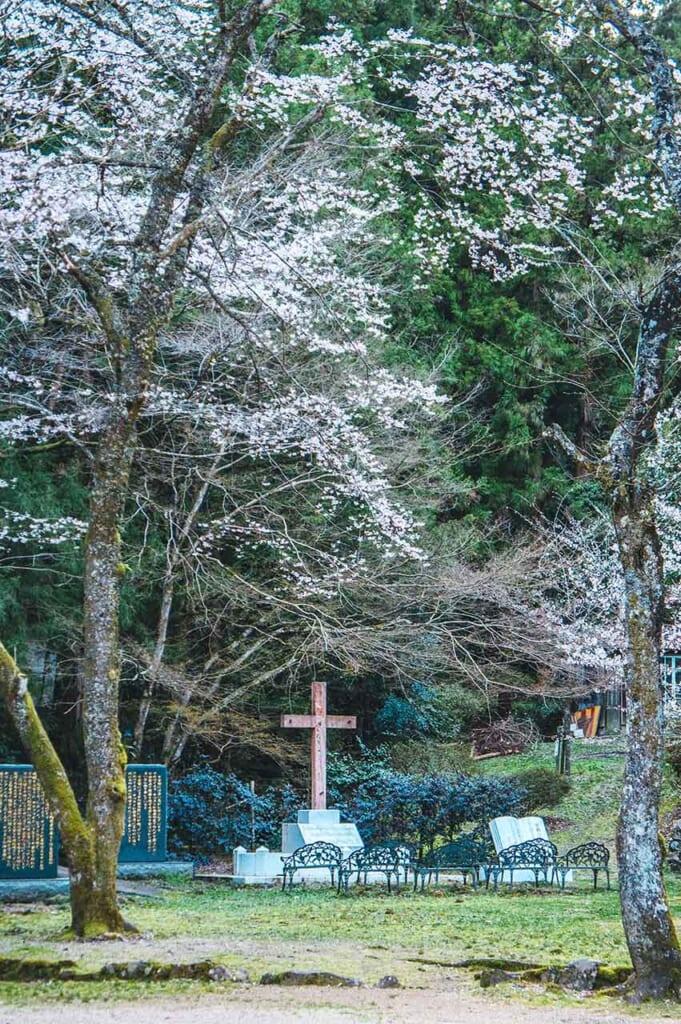 Croix chrétienne et cerisiers en fleur au Japon