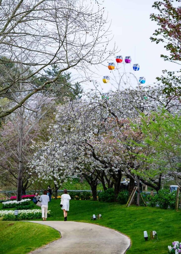 Hamamatsu Flower Park et ses cerisiers en fleurs