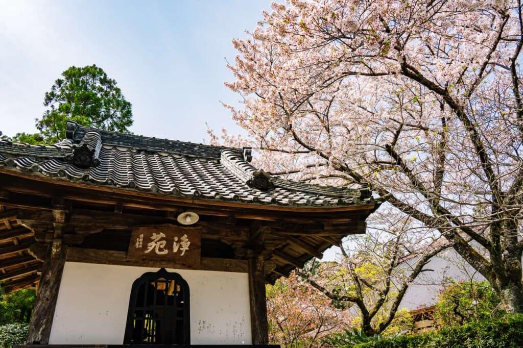 Le temple Ryotan-ji accompagné de magnifiques cerisiers
