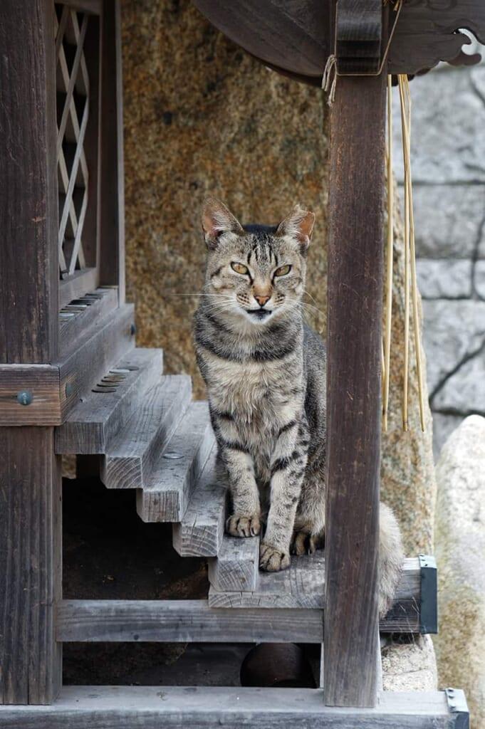 Manabeshima, chat
