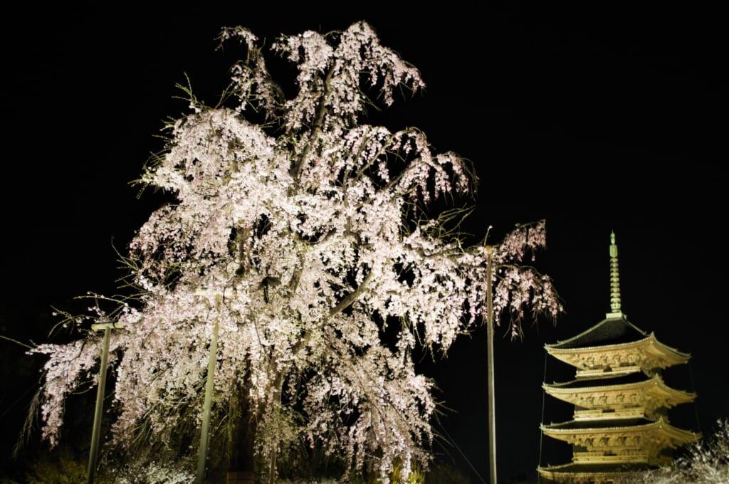 Light-up au Toji