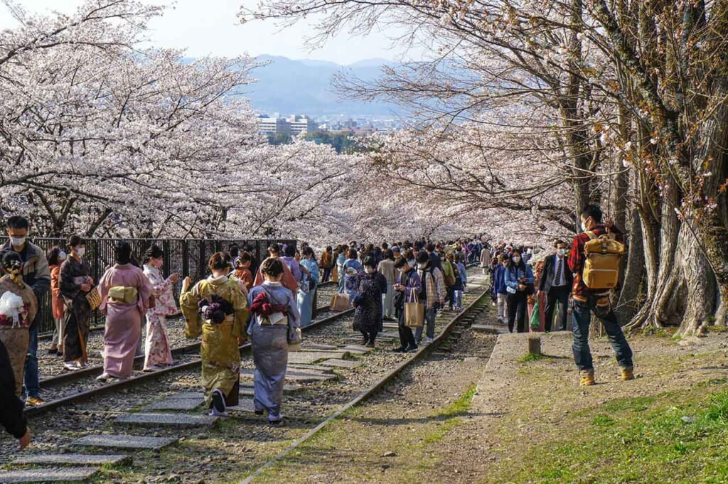 Keage incline à Kyoto pendant la floraison des cerisiers : une foule de personnes venus profiter du hanami