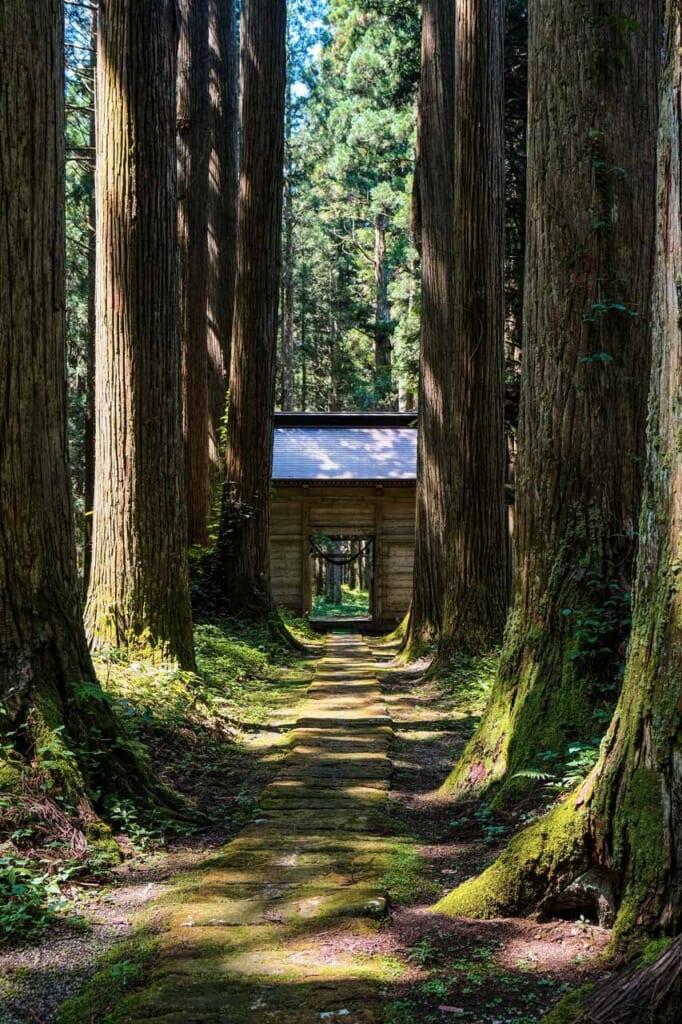 Cèdres centenaires bordant l'allée d'un sanctuaire au Japon