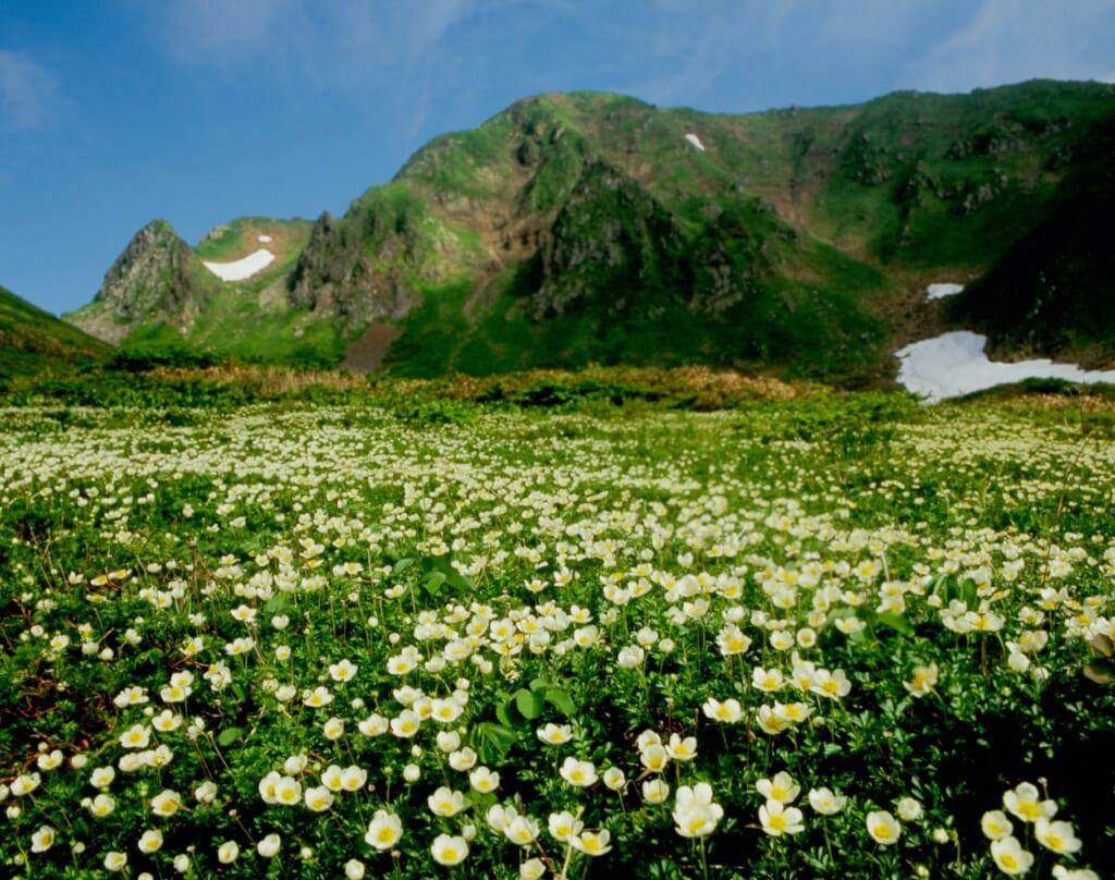 le mont Akita-Komagatake à semboku durant l'été