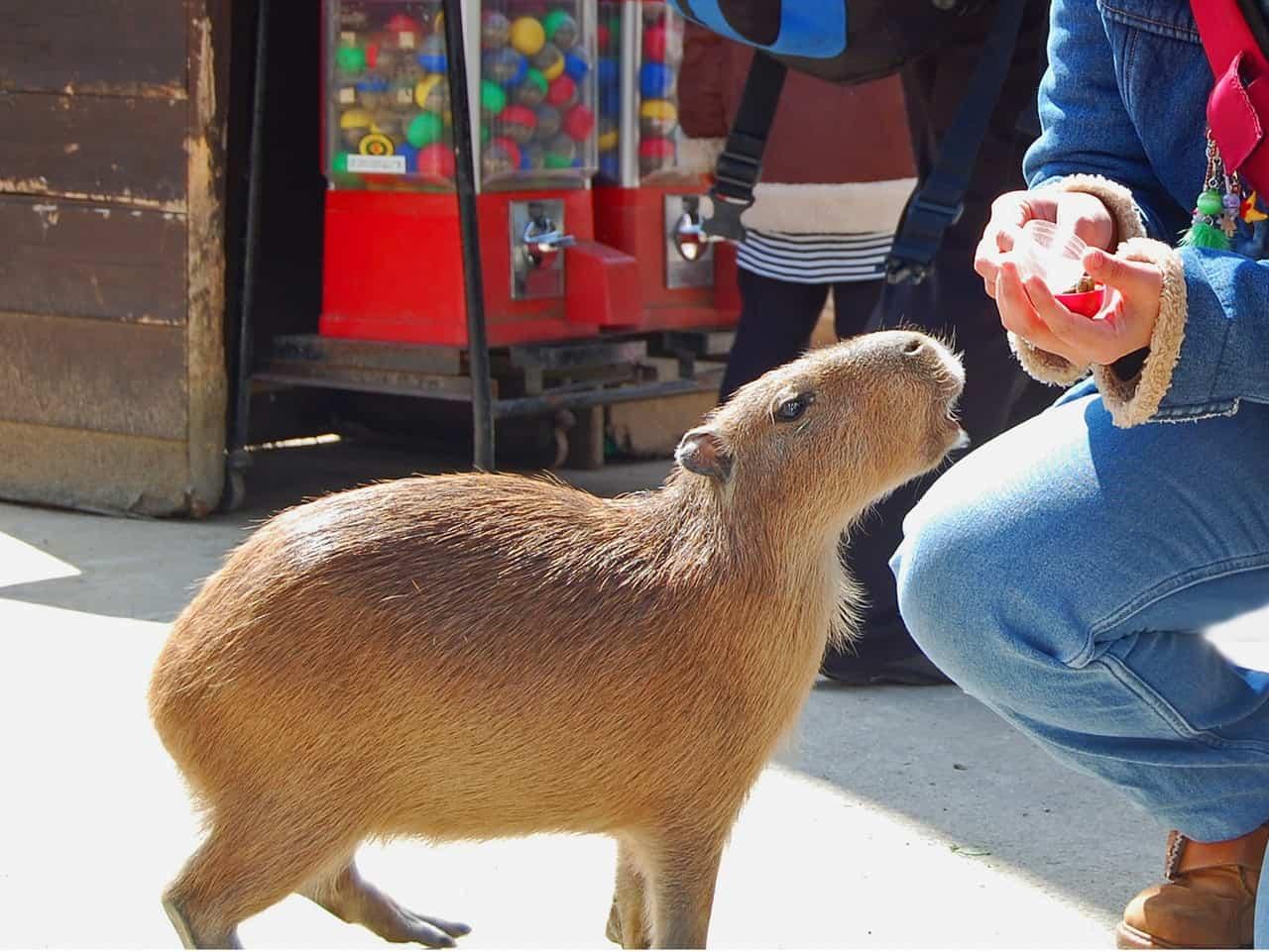 Nagasaki Bio Park: animales y aventuras en el principal zoo de la ciudad