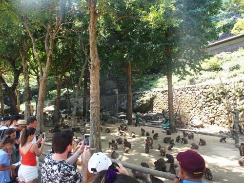 Monos de Takasakiyama, en Oita.