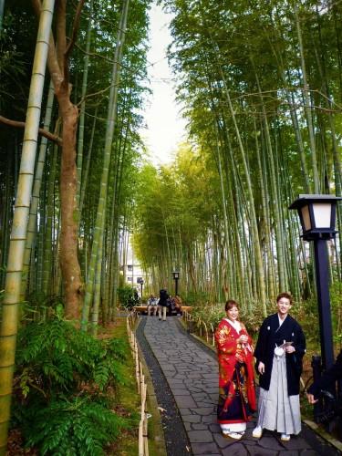 Bosque de bambú en Shuzenji, Shizuoka.