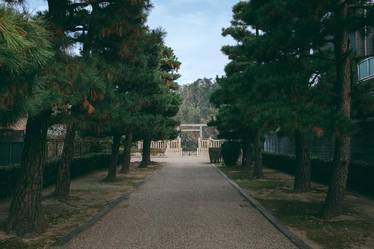 la tumba tiene una gran extensión de árboles
