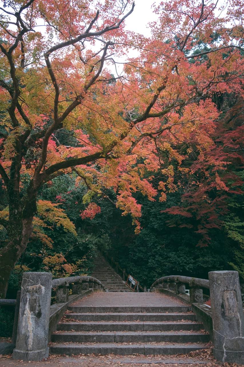 Los alrededores de la montaña cerca de Osaka son exuberantes en otoño