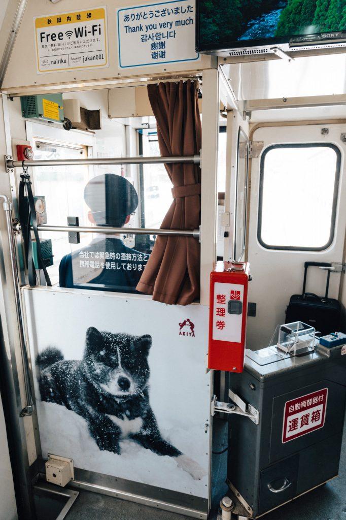 El tren del perro mostrando la raza de Akita con orgullo