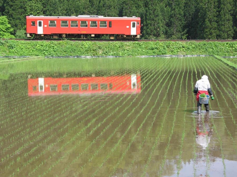 El akita Nairiku, uno de los trenes japoneses con preciosos paisajes de arrozales