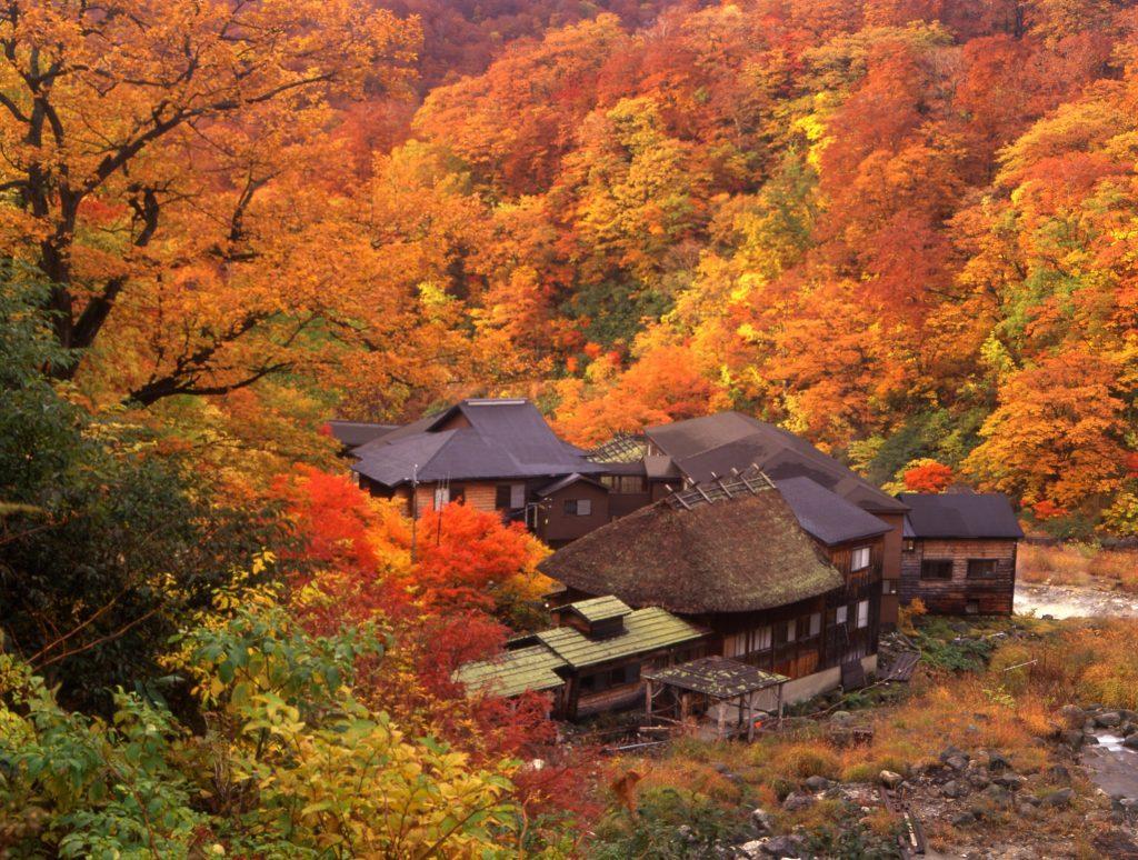 Los colores del otoño en Akita