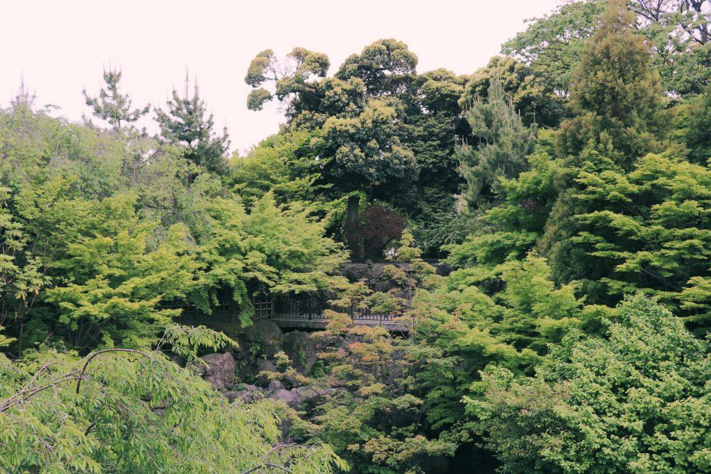 En Momijiyama hay muchos árboles