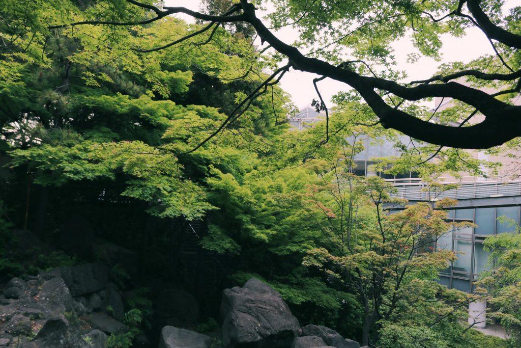 Frondosidad verde en Momijiyama