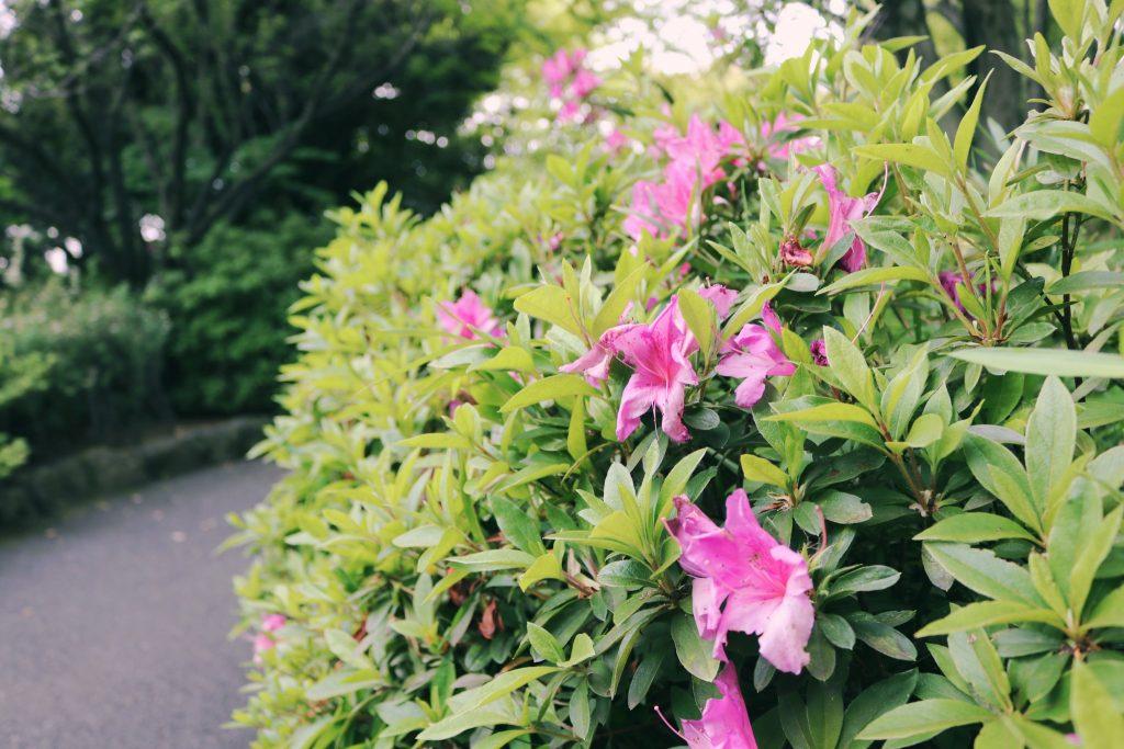 Flores en el parque Momijiyama