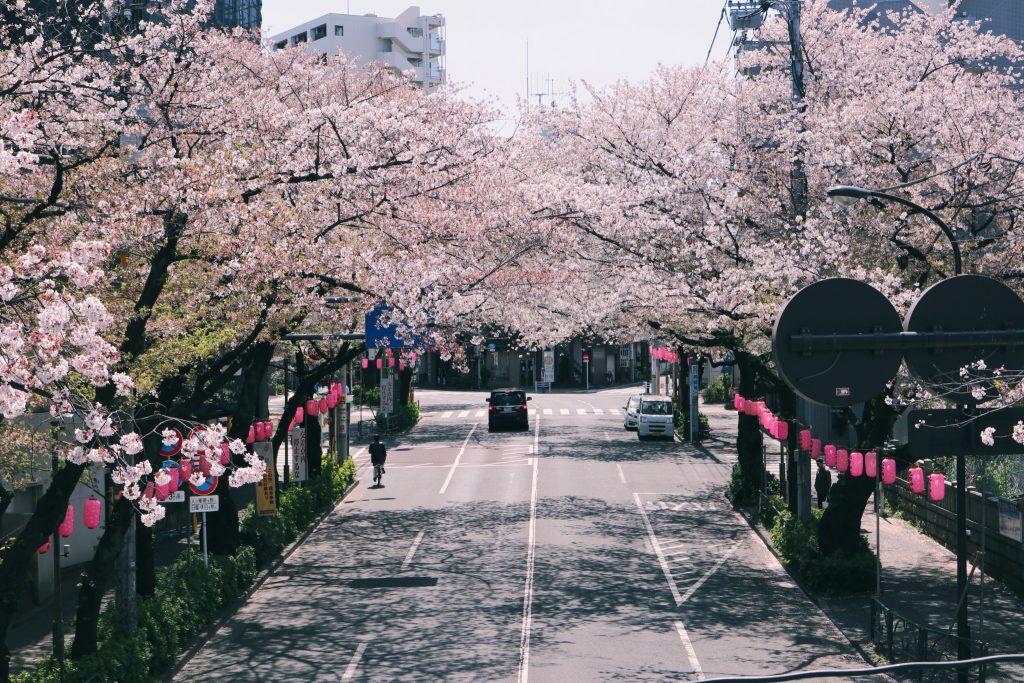 Nakano dori en primavera