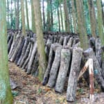 Alójate a Noka Minshuku – una estancia agrícola – cerca de Kitsuki