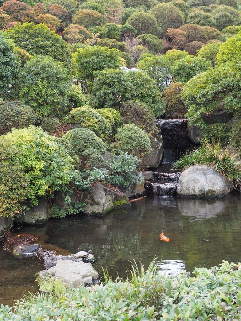 Un estanque en el santuario Nezu