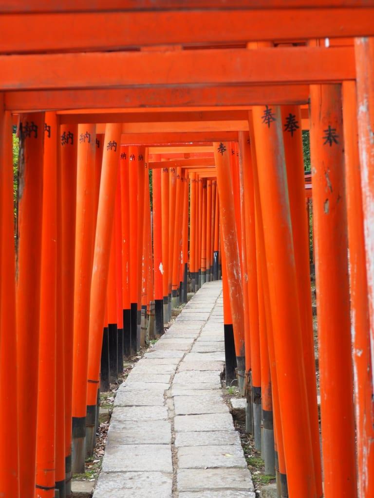 La famosa línea de torii en el santuario Nezu