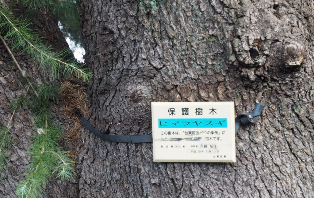 Este cedro está protegido por el gobierno