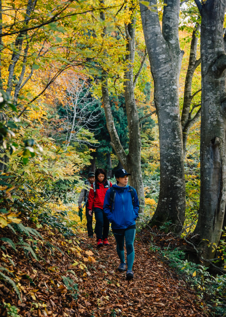 Caminando con mis compañeros a lo largo del sendero Shin-etsu