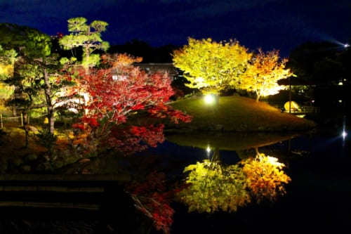 Iluminación nocturna del follaje otoñal en Korakuen, Okayama, Isla de Honshu, Japón