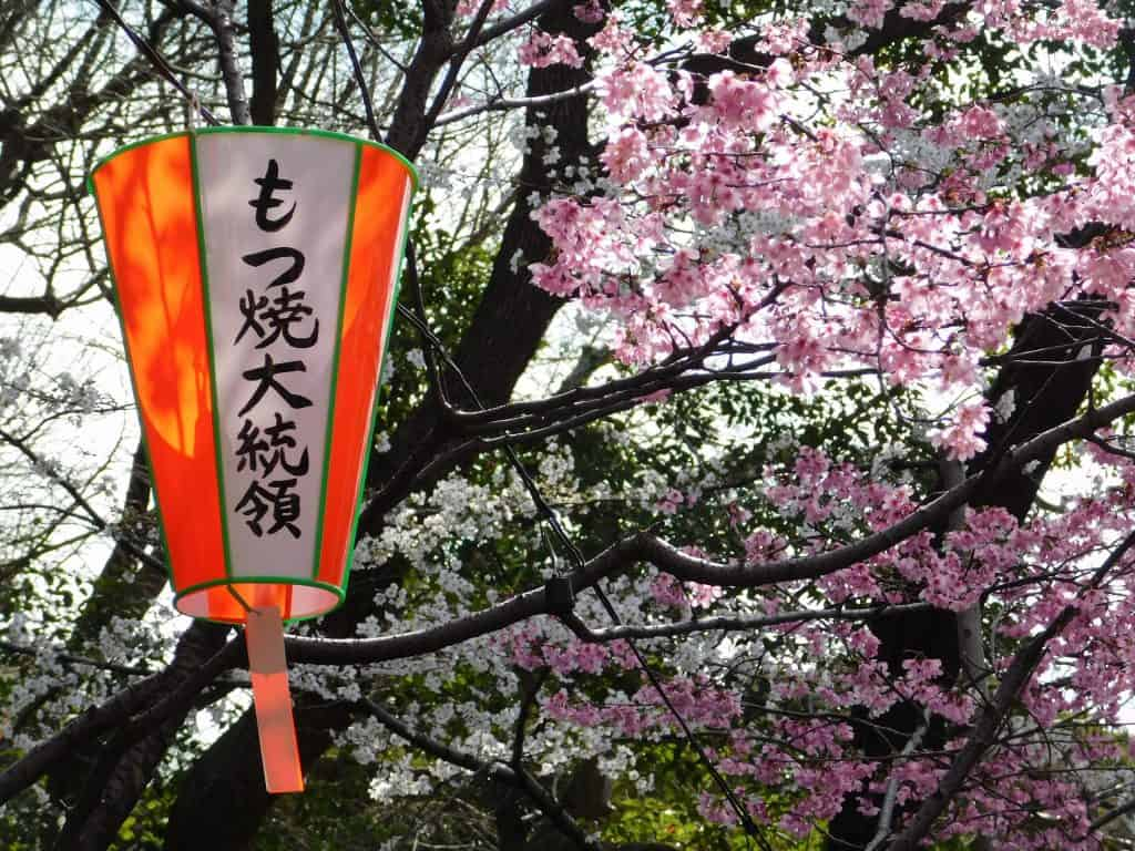 Sakuras en el parque de Ueno, Tokio, Japón