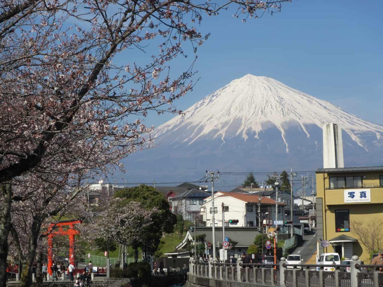 Dónde ver los cerezos en flor cerca del Monte Fuji