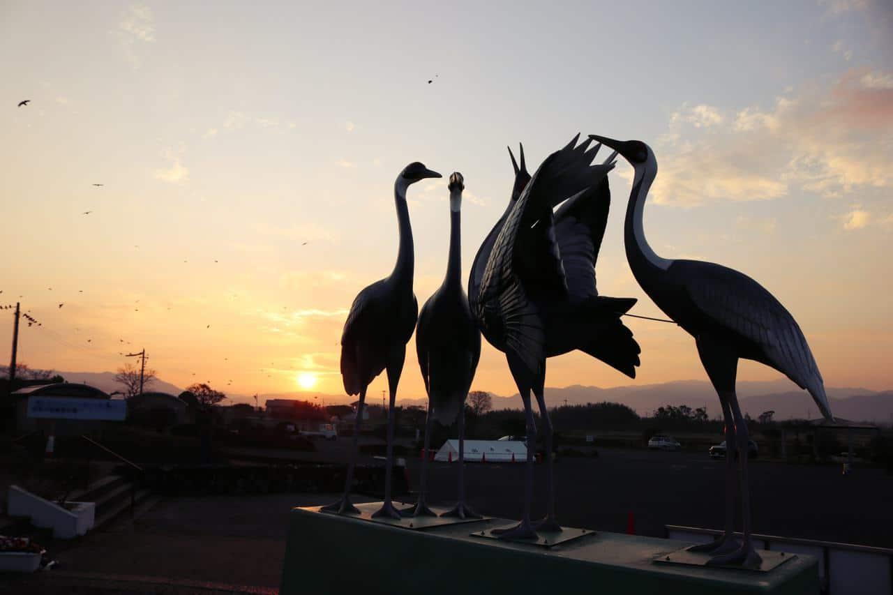 Izumi: el mejor lugar para observar grullas japonesas