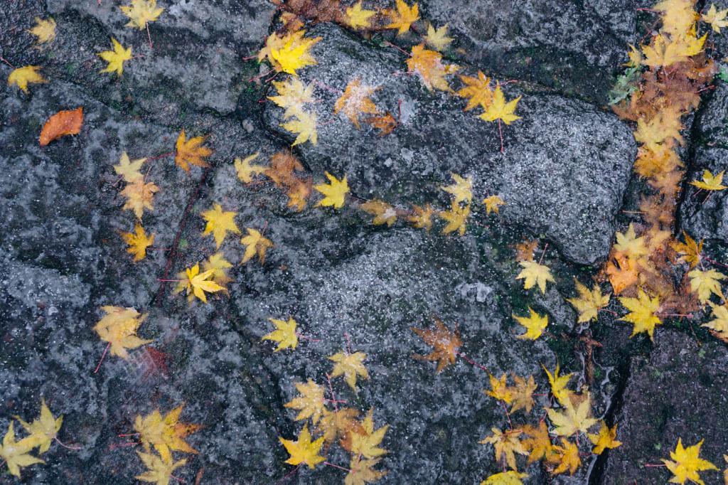 Terreno mojado con hojas caídas en el Daisenji