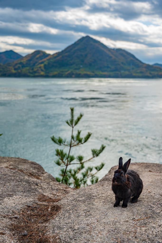 El mar, las vistas y conejos