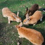 La isla de los conejos: un adorable viaje desde Hiroshima