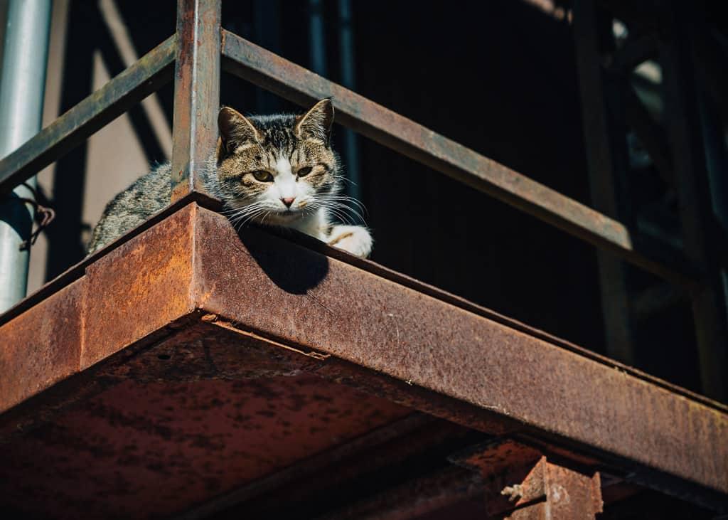 Gato curioso en Iiyama