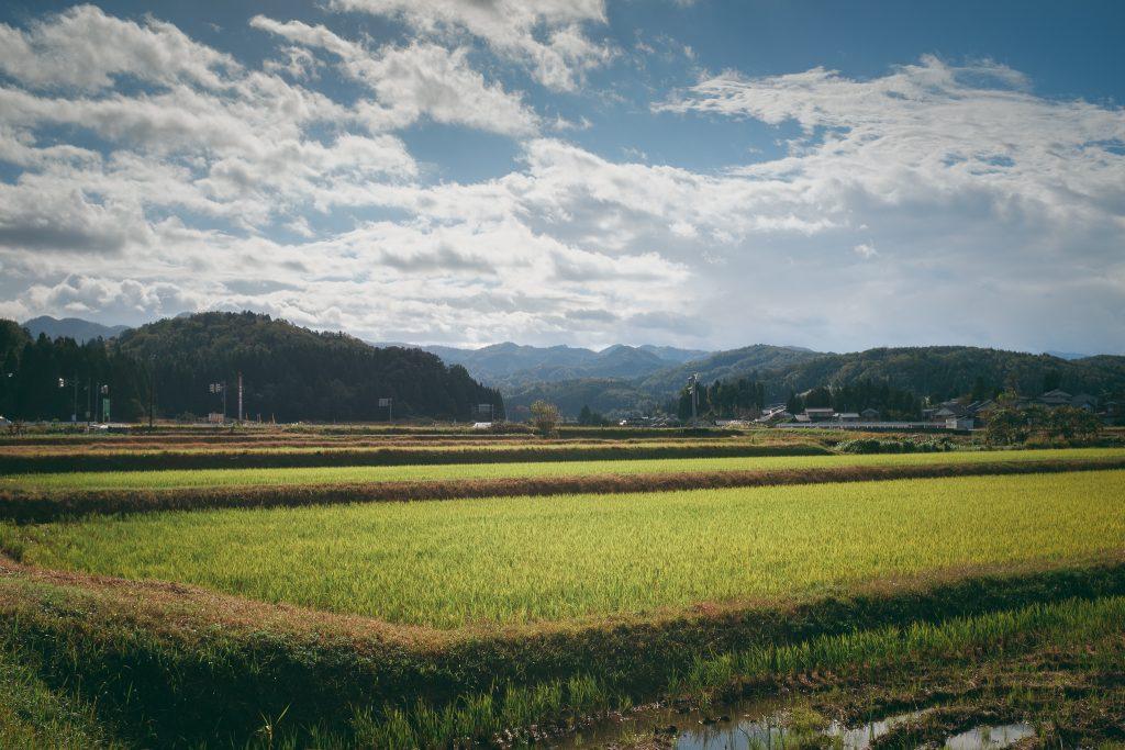 Campos de arroz en la prefectura de Toyama.
