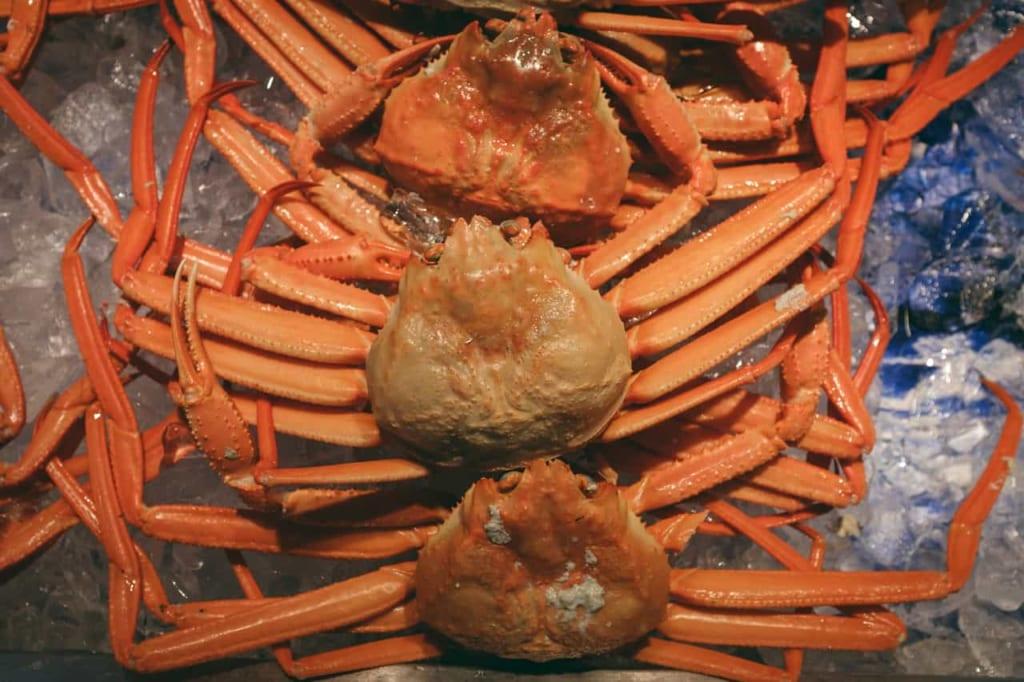 El cangrejo rojo de Toyama.