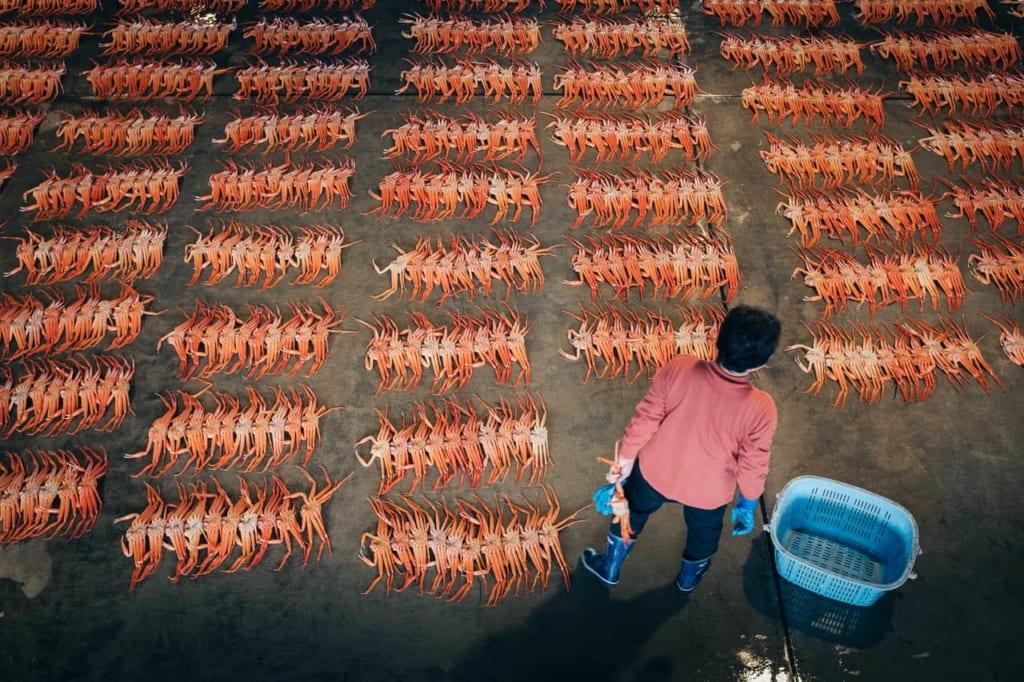 La subasta del cangrejo en el Mercado de Shin-minato Kitokito.
