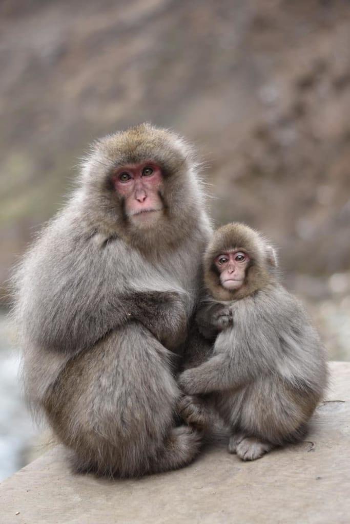 Una madre e hijo mono en los baños termales de Jigokudani, Nagano, Japón