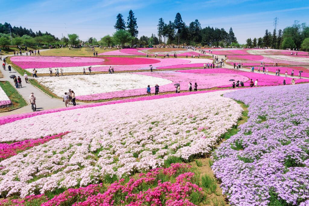 Festival en Chichibu, con coloridas flores