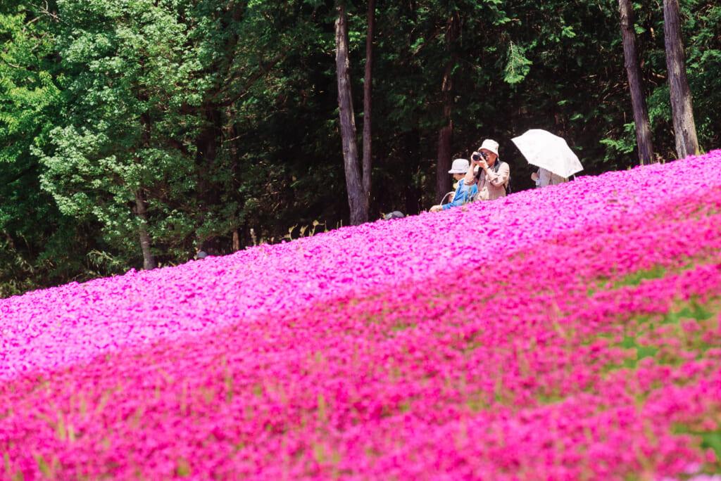 flores rosas en el Hitsujiyama Park