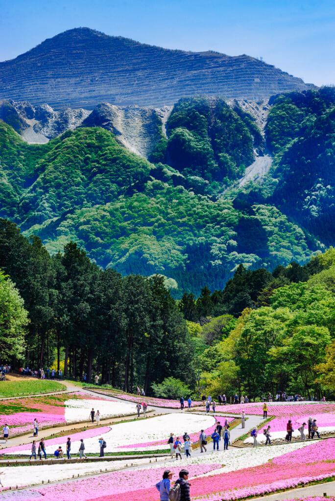 Vistas espectaculares del monte Buko y las flores del festival
