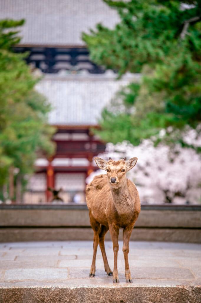 ciervo en las puertas del templo todaiji