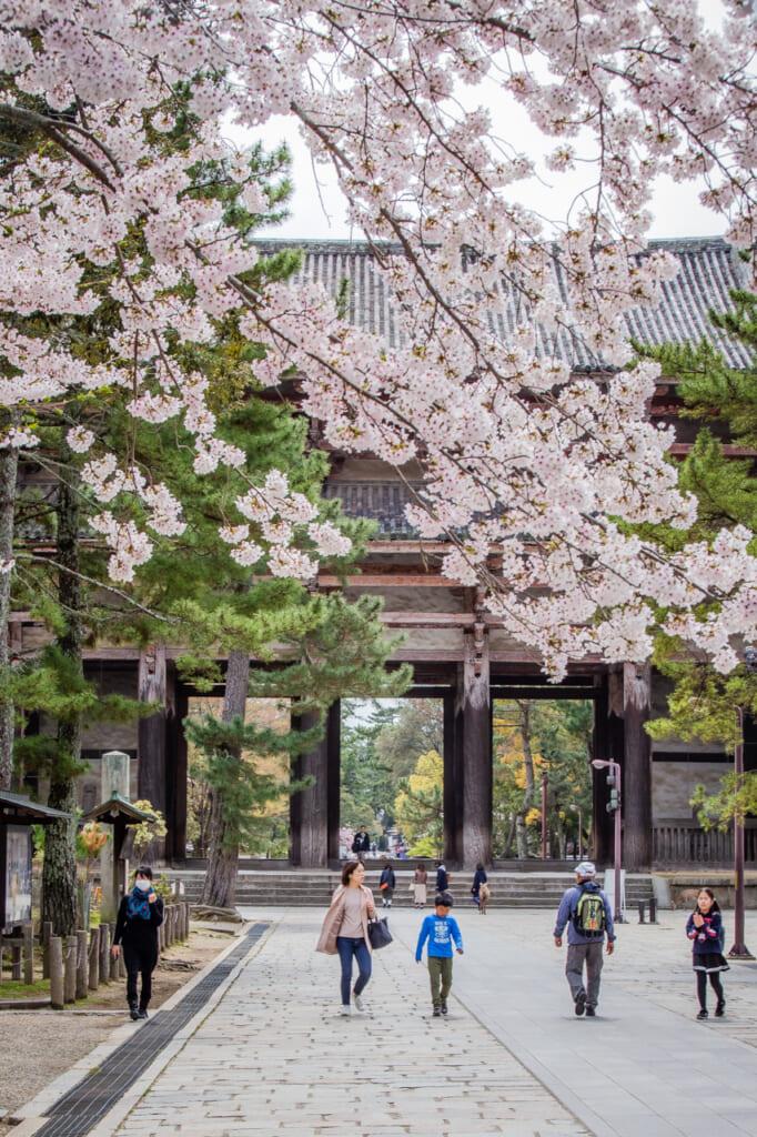 cerezo en flor delante del templo todaiji