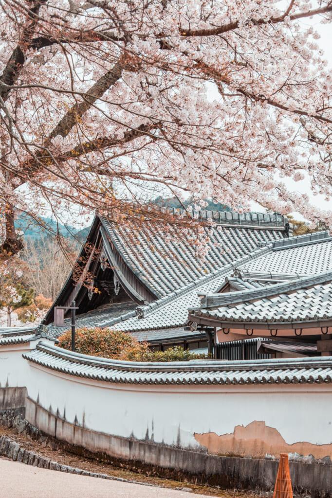 edificio japonés y cerezos en flor