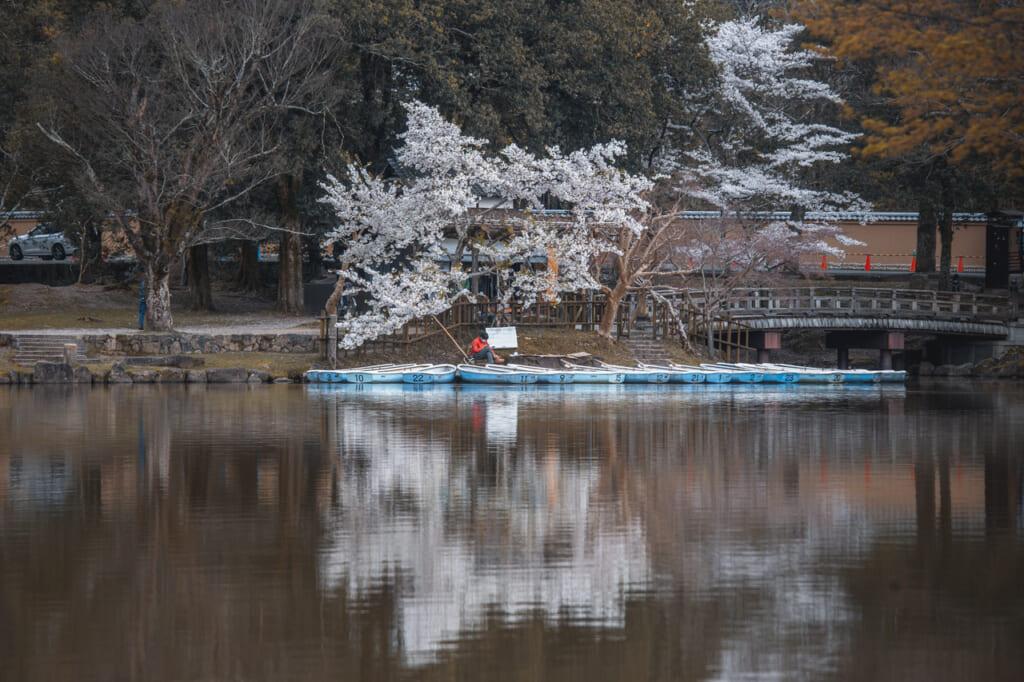 cerezos en flor reflejados en el agua