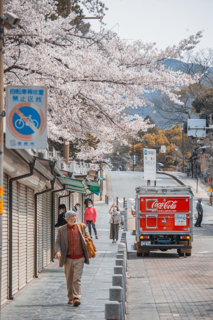 puestos de souvenirs y cerezos en flor en la calle sanjodori
