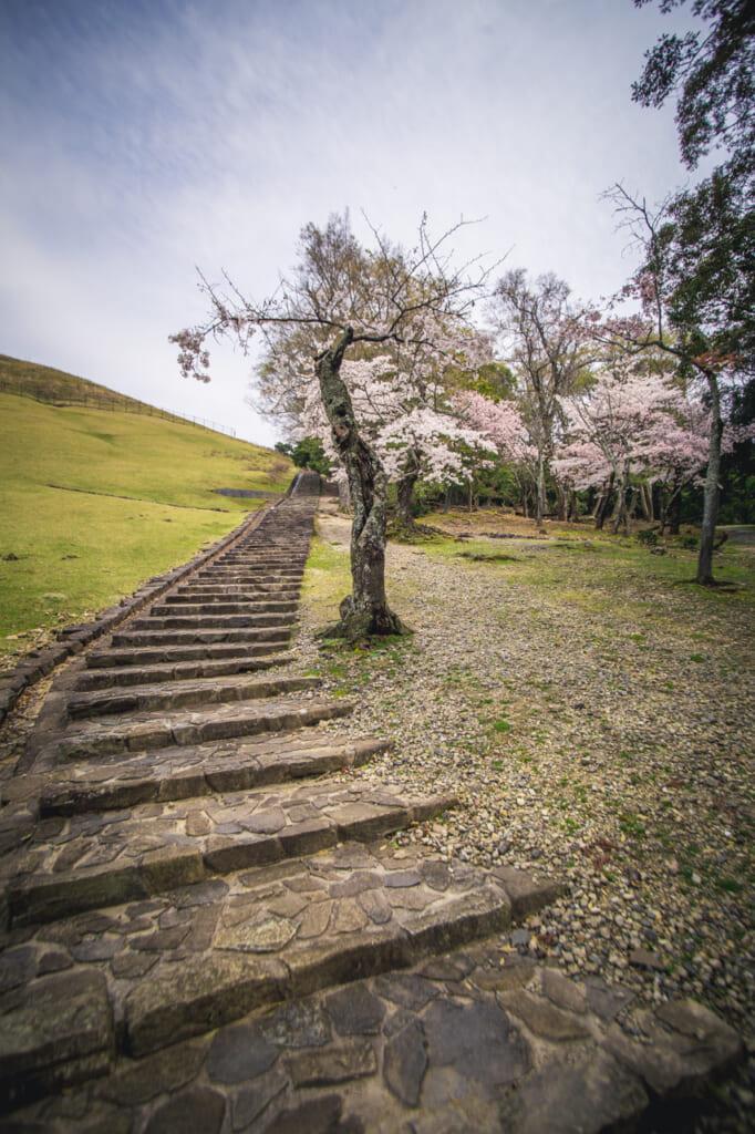 camino de subida a la cumbre del monte wakakusa