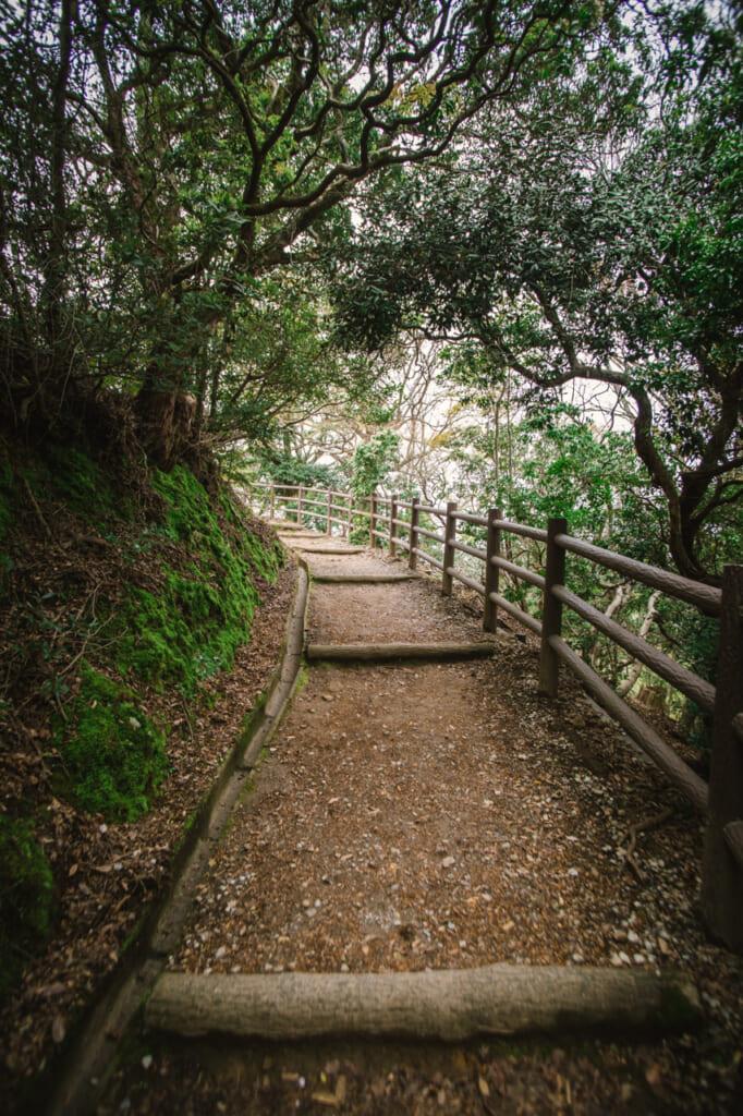 camino verde en el monte wakakusa