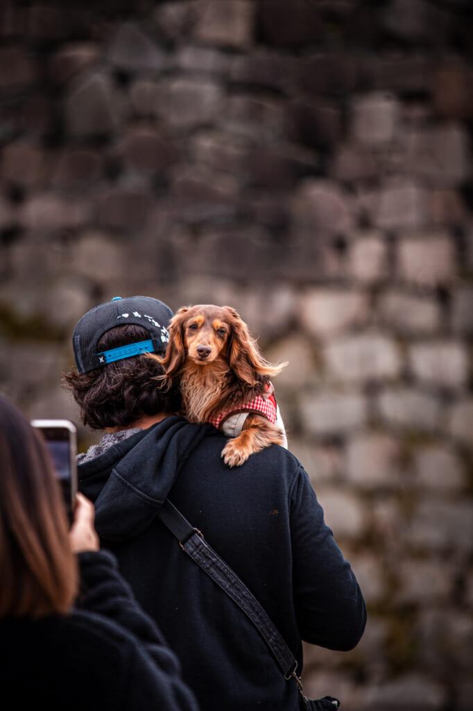 perro en el castillo de osaka