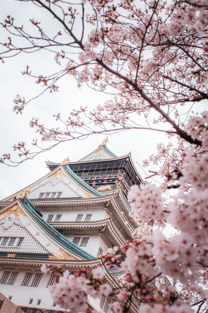 cerezos en flor delante del castillo de osaka